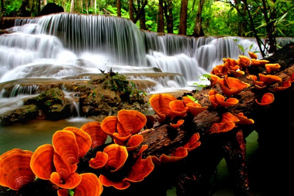 Orange Mushrooms Near Waterfall 600x400